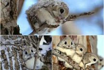 Cuties! / Nuttede dyr!