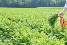 Crop Protection Market