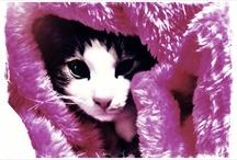 Cat / Mele, Laki, Lea, Mama.