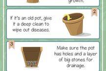 Gardening Infographics / Step-by-step visual guides for making the most of your garden