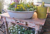 kvety , záhrada