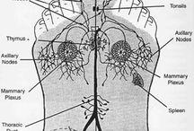 Health / Reflexology