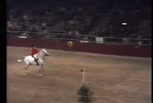 horse jumping 7 1/2 foot