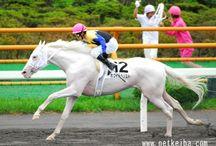 Equine Inspiration