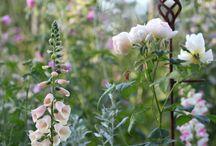 smukke blomster.