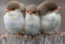 Cute birdies!