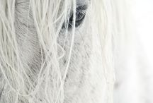 Horses / Beautiful images of horses