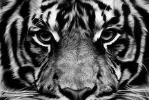 Natura!!! / Animales, belleza natural!!