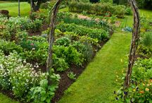 1.GARDEN | PLANTS | OFFICE / Outdoor gardening, home gardening, plants, green.