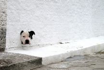 DOGS by Paola Vianna /  Photo by : Paola Vianna® www.paolavianna.com.br  Please do not remove the description.