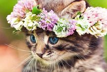 gatinha flor