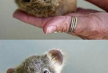 animals+nature