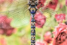 Dragonfly Beauty / ✽ The dragonfly, in almost every part of the world symbolizes change and change in the perspective of self realization; and the kind of change that has its source in mental and emotional maturity and the understanding of the deeper meaning of life. ✽