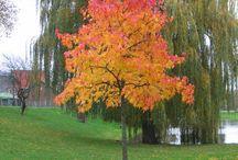 Herfst / De geur van herfst, de kleur van herfst, de beleving van herfst kortom alles over dit bijzondere jaargetijde.