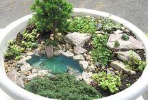 Fairy and frog garden