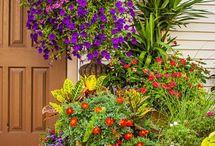 Garden & design