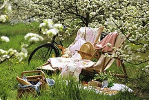 Picnics / ♥ Let's Eat in the Garden ♥ / by Marja Schwedler