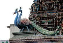 Chennai : Things to do