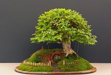 World of Bonsai