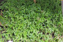 Identificando mis plantas
