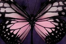 Inspiration Butterfly Collection