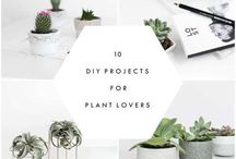 DIY for Plant Lovers