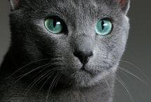 CATS CATS CATS♡♡♤□♡:)