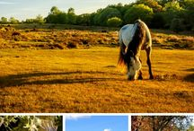 TRAVEL - New Forest, England