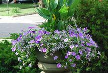 flower pots for outdoors / by Debra Gibbs