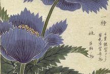 botanical/zoological illustrations