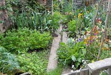 Moestuinideeen / Leuke tuinieren