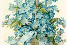 Mavi mineli ve benzerı cicekler.