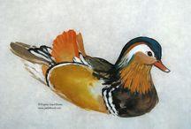 Mandarin Ducks / Mandarin Ducks