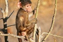 Baby Animals / The cuteness that awaits your on one of our life changing Safaris