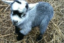 Ridiculously cute animals