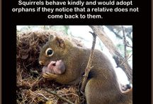 Nuts and squirrels / Squirrels and rodents