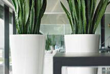 planten voor binnen nen