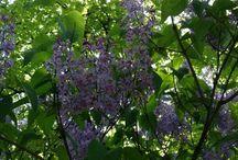 Spring in the Botanical Garden