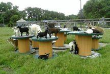 goat yard