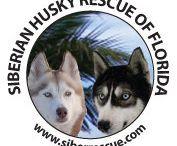 Animal Rescue Groups