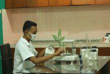 Foto Aktivitas di lab Pengembang Sengon Solomon