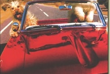 Miscellany :: Furry, fluffy things / All things cute and cuddly. / by Anastasia Marie