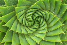Spirals, Fibonacci Sequences, Swirls & Fractals / by Laura Timmins