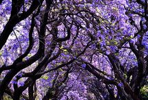 Magical Trees