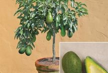 Fruit Trees Ideas