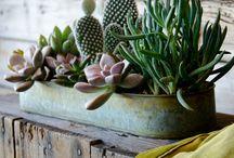 Βεράντες, κήποι, φυτά !