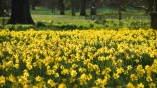 ADORE FLOWERS  * * *