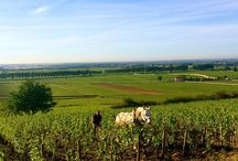 Drink Burgundy / Bourgogne, tradition, terroir, aines, winegrowers, winemakers...