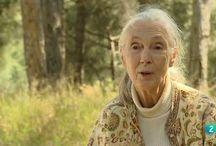 Proyecto Jane Goodall