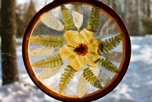 Dried/Pressed Flowers